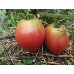 Tomates Anna Russian